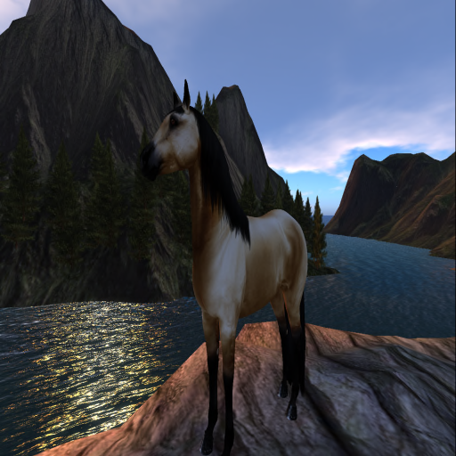Snapshot _ AmCoz Horse Riding Trails-- Newest Location- Under C.png