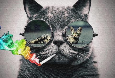 Cat Sunglasses Mirrors small.jpg