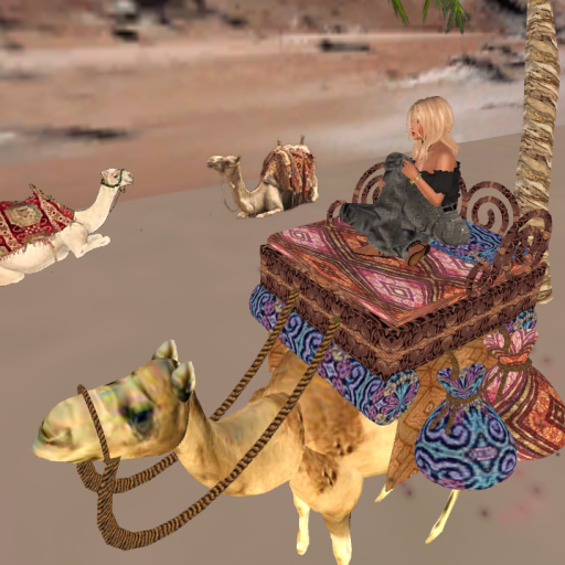 ride on a camel.png