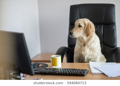 golden-retrievers-working-office-260nw-594060713.jpg