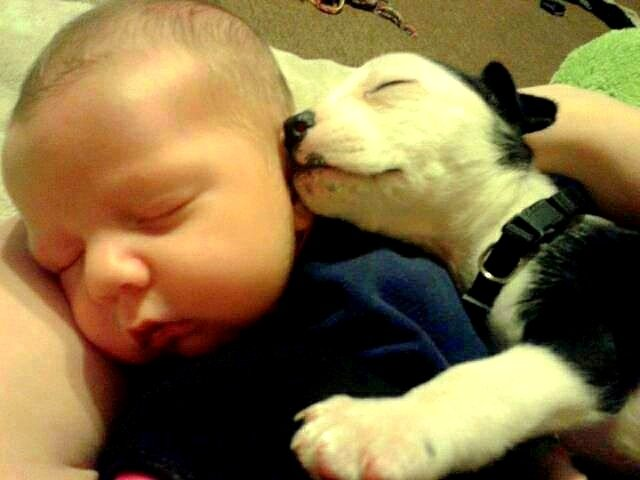 5.16.15-Cutest-Sleeping-Puppies15.jpg