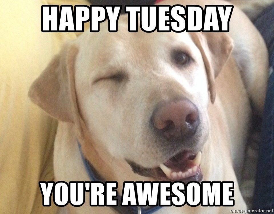 happy-tuesday-youre-awesome (1).jpg