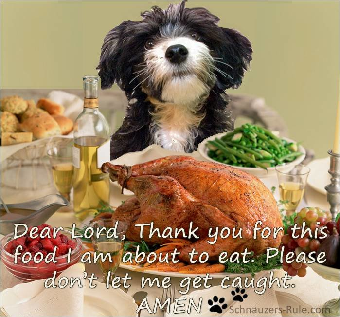 thanksgiving-dog.jpg