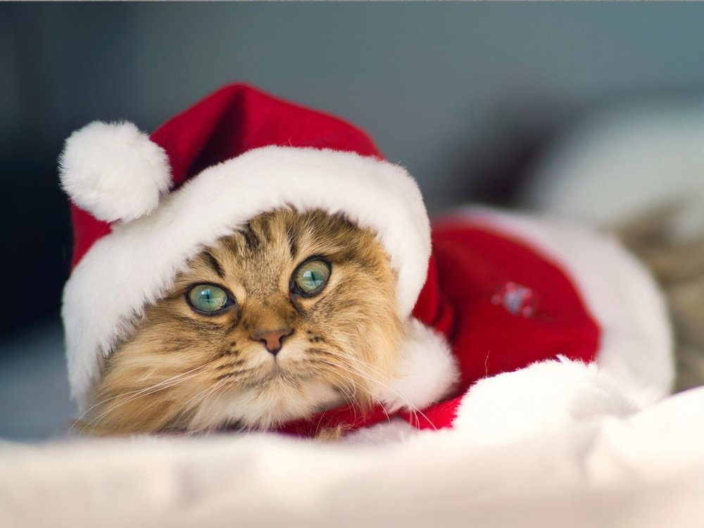 Kitty in Santa Hat.jpg
