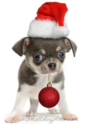 christmas-puppy-names2.jpg