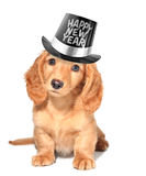 new-year-s-eve-puppy-3714406.jpg