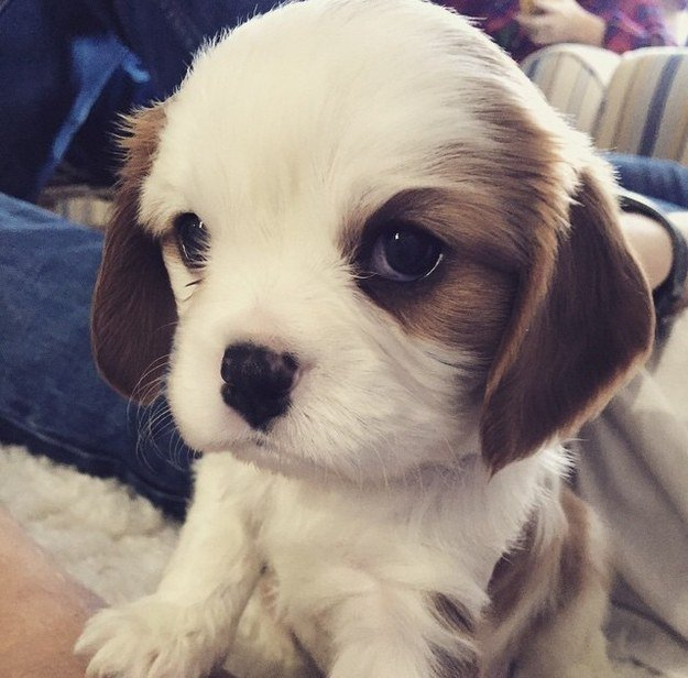 who-is-just-the-cutest-little-puppy (2).jpg