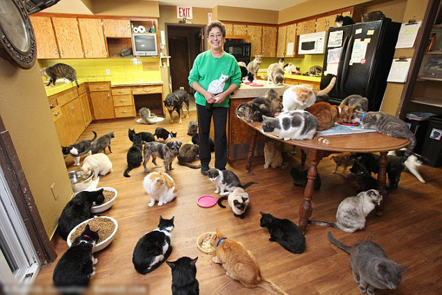 Crazy-Cat-Lady-Lived-With-1000-Cat-7.jpg.f93287980daa176488a316f368863f23.jpg