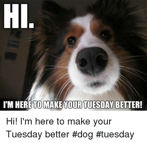 hi-im-here-make-your-better-to-tuesday-hi-im-27790842.png