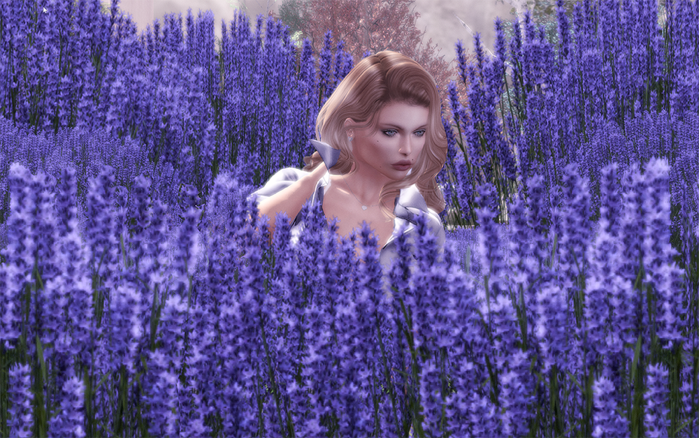 Lavender field Second Life.png