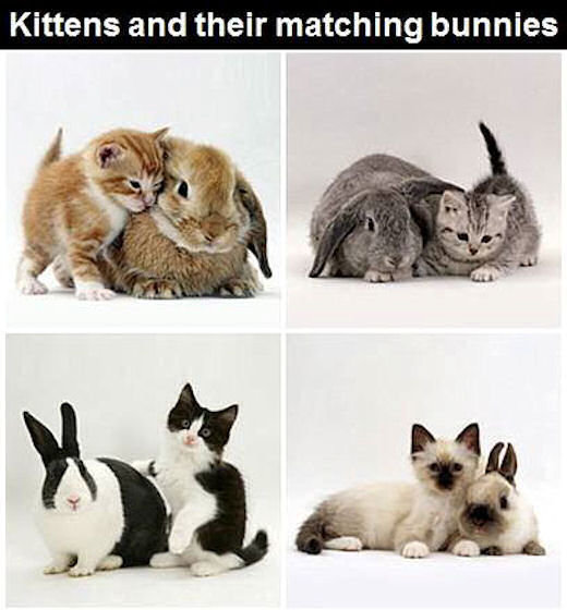 Kittens-And-Matching-Bunnies.jpg
