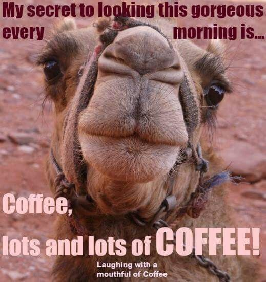 215689-Hump-Day-Camel-Funny-Wednesday-Coffee-Quote.jpg
