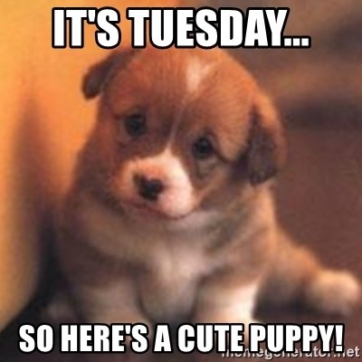 its-tuesday-so-heres-a-cute-puppy.jpg
