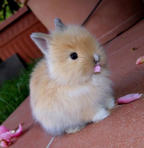 cutest-bunny-rabbits-a-05.jpg
