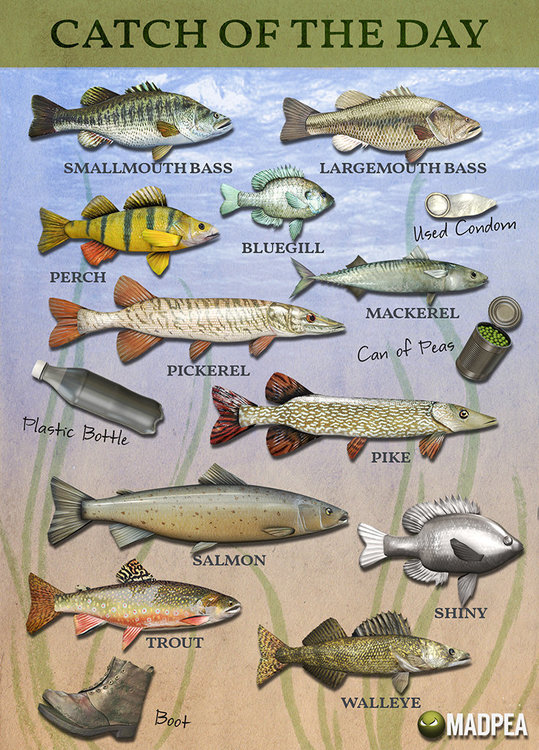 FishChart-1024[1].jpg