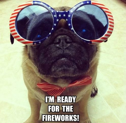 funny-pug-for-the-4th-of-july.jpg