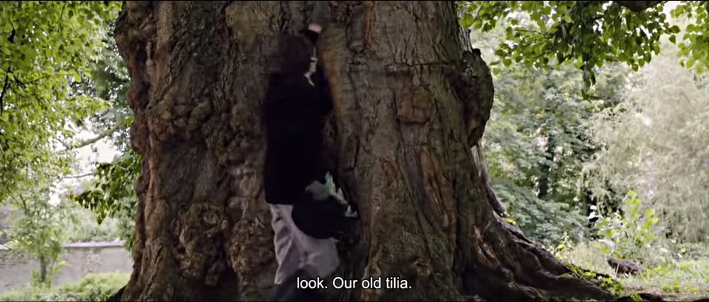 Our Old Tilia.jpg
