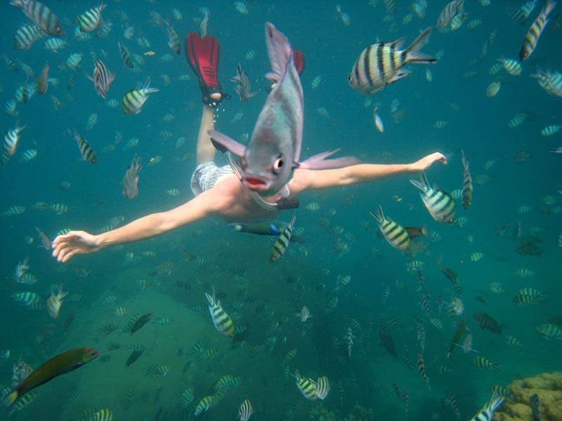 underwater-fish-photobomb-animal-photobombs.jpg.1f6c29af1316b36dee84a5534846b4d8.jpg