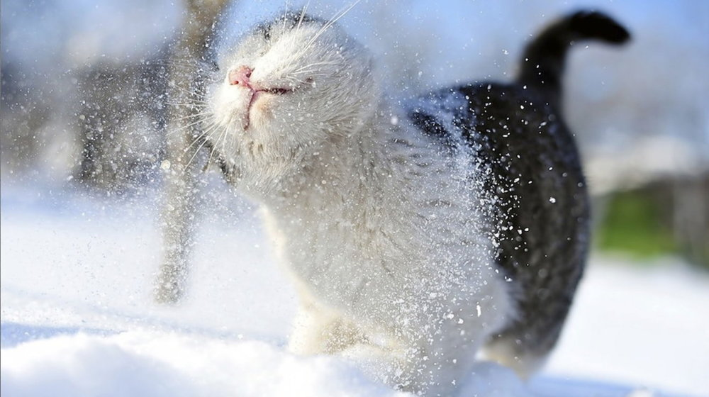 Kitty Cat in Snow.jpg