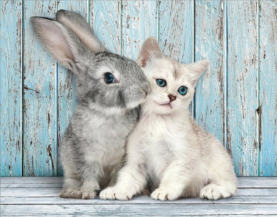 Bunny and Kitten.jpg