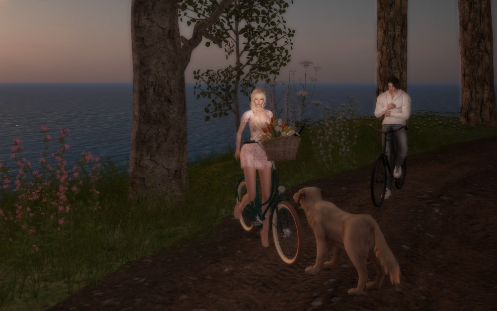 Dog Bicyles and Sunset.png