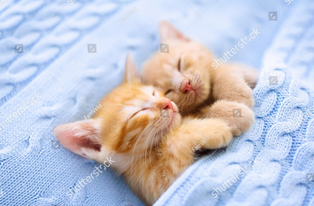 stock-photo-baby-cat-sleeping-ginger-kitten-on-couch-under-knitted-blanket-two-cats-cuddling-and-hugging-1470602405.jpg