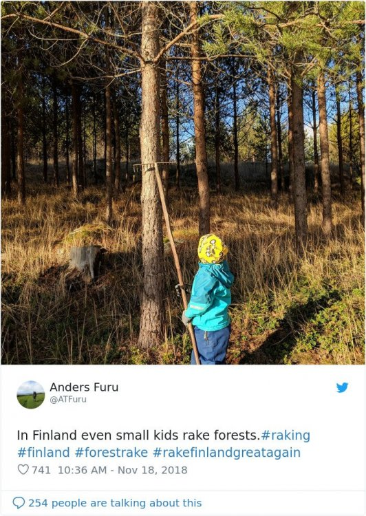 rake small kids forest.jpg