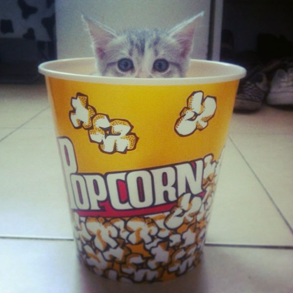 can-cats-eat-popcorn-05.jpg