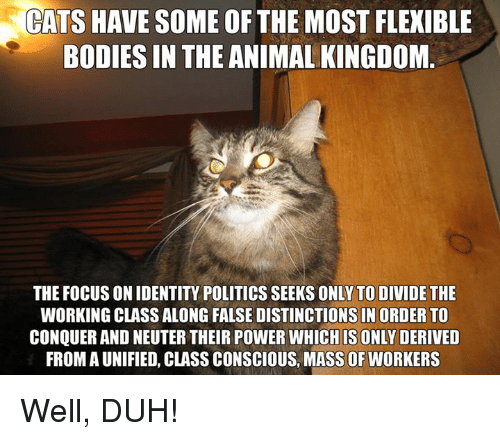 cats-have-some-of-the-mostflexible-bodies-in-the-animal-1435197.png