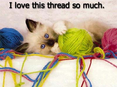 i-love-this-thread-so-much-cat-cats-kitten-kitty-pic-picture-funny-lolcat-cute-fun-lovely-photo-images.jpg