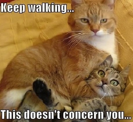 funny-cats-fight-orange.jpg