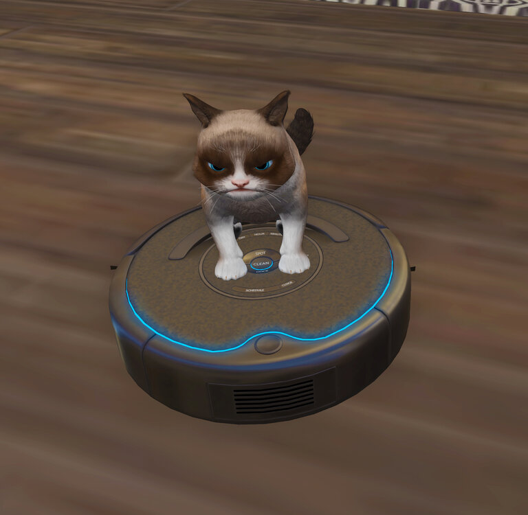 Cat on a roomba cropped.jpg