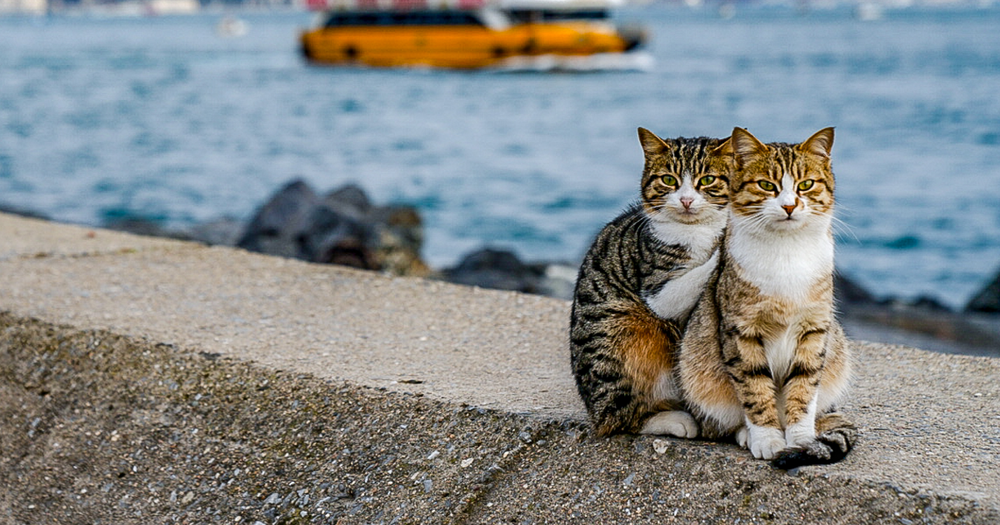 travelling-cuddling-stray-cats-istanbul-orin-fb12.png