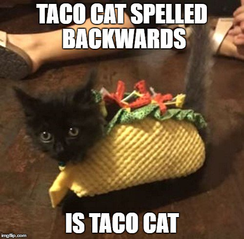 Taco-Cat-Spelled-Backwards-Cats-Meme.jpg