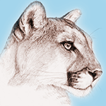 eliot_cougar