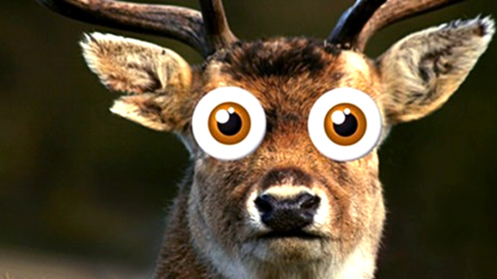 aHqe3kNYQpORglDlVWwH_Deer_in_the_Headlights_ArcadiaToastmasters_org.thumb.png.e7de429519ca9d7ccce5eaf6c7727c94.png
