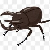 The masked beetle