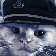 Captain Kitten