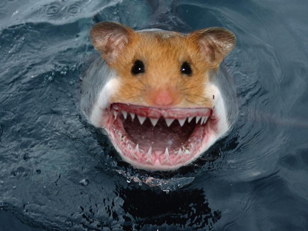 hamstersharkcompleted.jpg