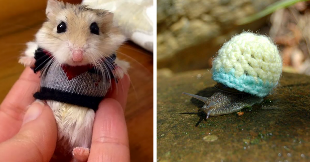 cute-animals-wearing-tiny-sweaters-fb4.thumb.png.cbdd41c94665e1ebba24f4515d7f050a.png