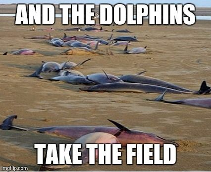dolphine take the field.jpg