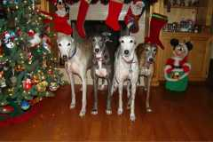 Christmas Dogs 2011small.jpg