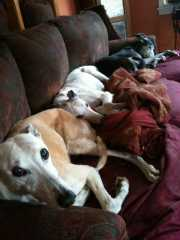 3 dog couch Mar 2011