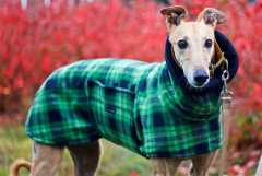 hound fancies coat1
