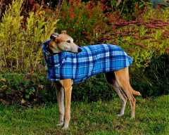 hound fancies coat2