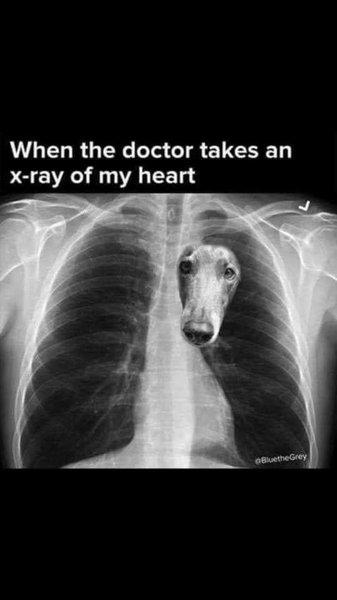 X-Ray of My Heart.jpg