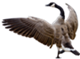 transparent-goose-1.png