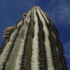 Saguaro Close Up