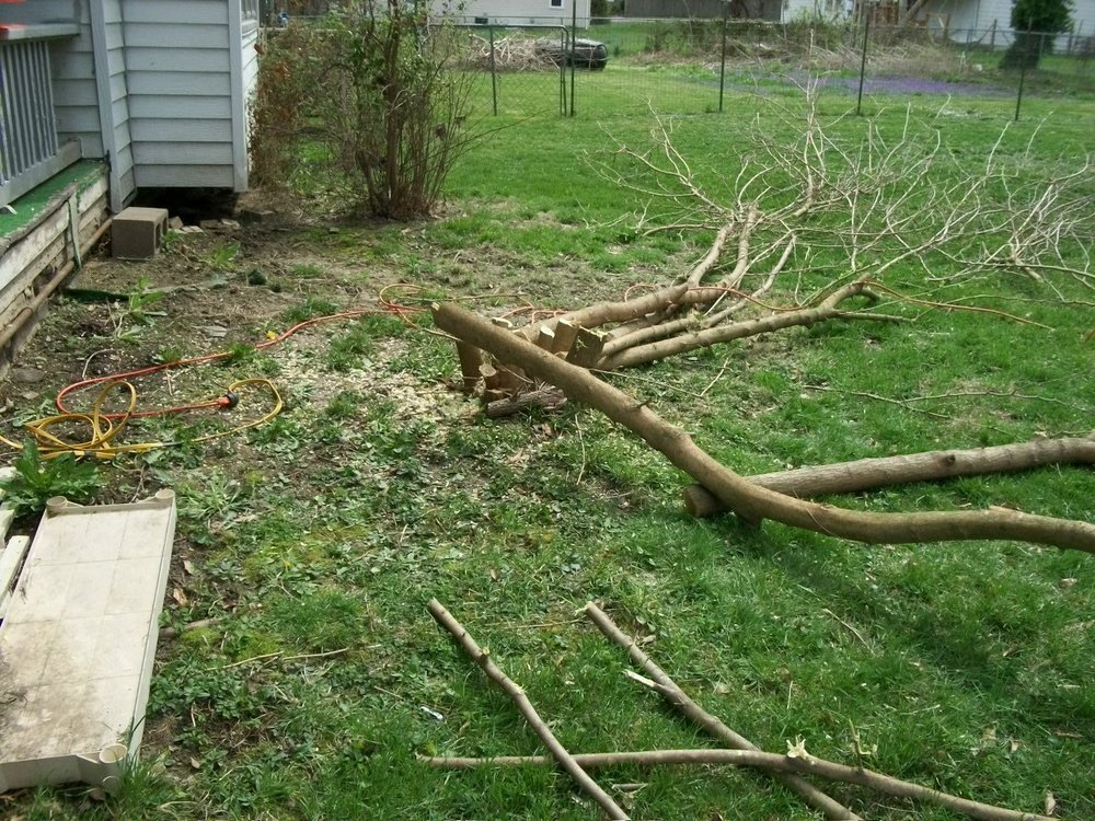 101_1045 Mulberry Tree gone.jpg