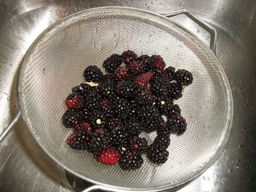 101_1101 Blackberries 2019 June.jpg